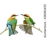 beautiful birds chestnut headed ...   Shutterstock . vector #438381655