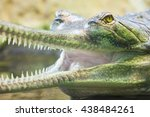 Gharial Crocodile  Also Knows...