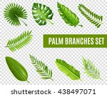 tropical palm tree branches... | Shutterstock .eps vector #438497071