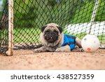 Funny Pug Dog Wearing Football...