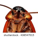 portrait of american cockroach  ... | Shutterstock . vector #438547015