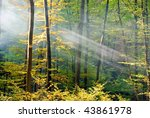 lights of the autumn forest | Shutterstock . vector #43861978