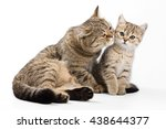 Stock photo striped cat and kitten isolated on white 438644377