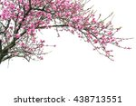peach blossome isolated on... | Shutterstock . vector #438713551
