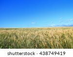 barley field with the blue sky... | Shutterstock . vector #438749419
