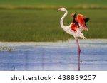 Flamingo And Nature Habitat....