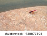 Red Dragonfly Stay On The Ston...