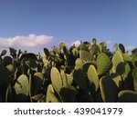 Big Prickly Pear Bush. Exotic...