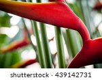 bird of paradise  condensation... | Shutterstock . vector #439142731