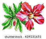 red adenium obesum house flower ...   Shutterstock . vector #439231651