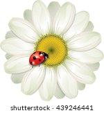 Ladybug Sitting On White Daisy...