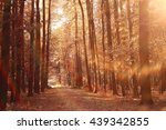 landscape autumn path in the... | Shutterstock . vector #439342855