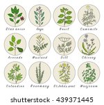 set of spices  medicinal herbs... | Shutterstock .eps vector #439371445