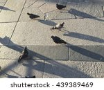 pigeons | Shutterstock . vector #439389469