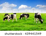 Cows On A Green Field With...