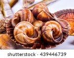 Sea Shells Background On A...