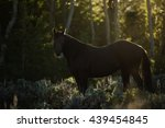 beautiful backlit black...   Shutterstock . vector #439454845