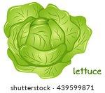 illustration of a fresh lettuce ... | Shutterstock . vector #439599871