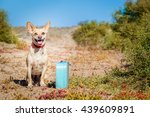 Stock photo dog abandoned at the street with bag or luggage 439609891