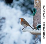 Robin And Snow