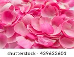 Stock photo beautiful delicate pink rose petals many rose petals closeup beautiful background for greeting 439632601