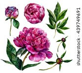 watercolor peonies and leaves.... | Shutterstock . vector #439749691