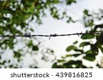 barbed and ant | Shutterstock . vector #439816825