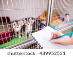 veterinarian writing into a... | Shutterstock . vector #439952521
