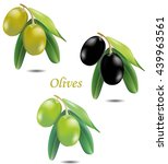 olives | Shutterstock .eps vector #439963561