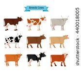 Cow Flat Icons. Vector Cows Of...