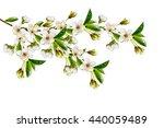 branch of cherry blossoms...   Shutterstock . vector #440059489