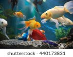 aquarium colourfull fishes in... | Shutterstock . vector #440173831