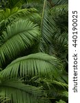 big tropical leaves | Shutterstock . vector #440190025