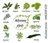 vector set of healing herbs. | Shutterstock .eps vector #440209105