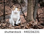 Stock photo photo of three color cat wandering at central park new york 440236231