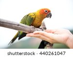 Women Are Feeding Parrot  Sun...