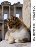 cat on the stone and ruins in... | Shutterstock . vector #44029600