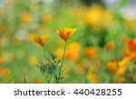 wildflowers | Shutterstock . vector #440428255