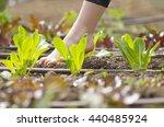 little  girl walking bare foot... | Shutterstock . vector #440485924