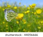 Spring Landscape   Green Veine...