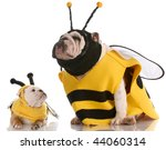 Stock photo mother and daughter bulldogs dressed up like bees 44060314