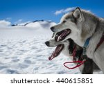 Husky Dog Sledge