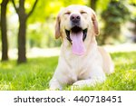 Funny Lovely Dog