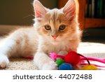 Stock photo kitten with toys 44072488