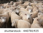 Flock Of Sheep Crowded Together