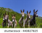 Six Curious Funny Donkeys In...