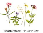 Beautiful dried flowers isolated on white