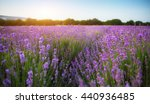 lavender beautiful meadow.... | Shutterstock . vector #440936485