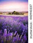 lavender field | Shutterstock . vector #440940337