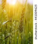 green wheat field and sunny day.... | Shutterstock . vector #441009625